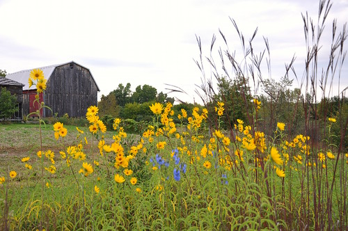 fall prairie | by Lynn Carson Harris