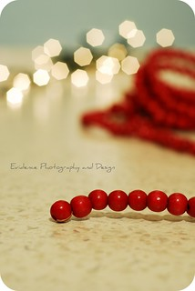 {Day 8} Have a holly jolly Christmas... | by Evidence Photography