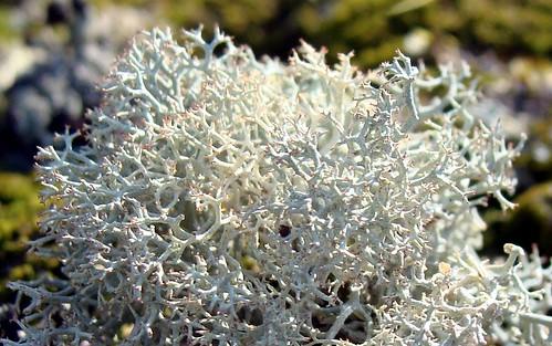 how to grow moss au