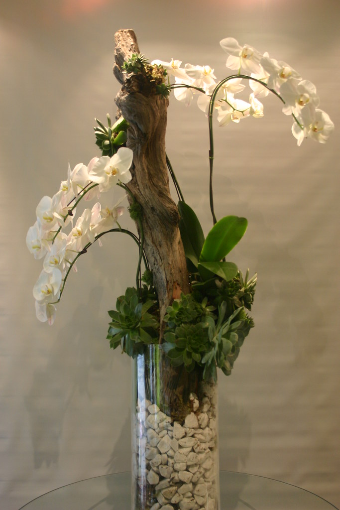 Orchid with succulents and driftwood 034 garden party for Bois flotte vase