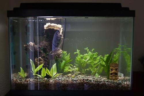 Empty fish tank we got a 20 gallon aquarium yes i am for Empty fish tank