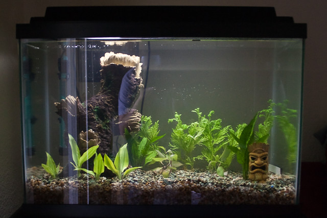 Empty Fish Tank | We got a 20 gallon aquarium! Yes, I am