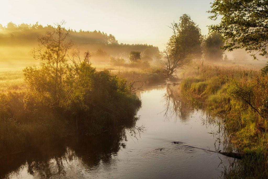 Bialowieski Park Narodowy Bialowieza National Park Flickr