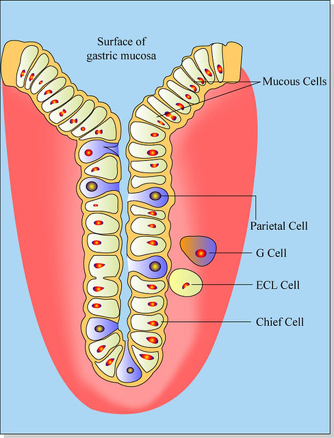 The Cell Diagram