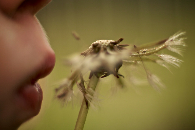 dandelion joy | My daughter experiencing one of the joys