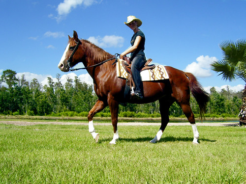 Image Result For Cowon Horse