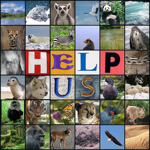 endangered animals collage   Gursharan Singh   Flickr