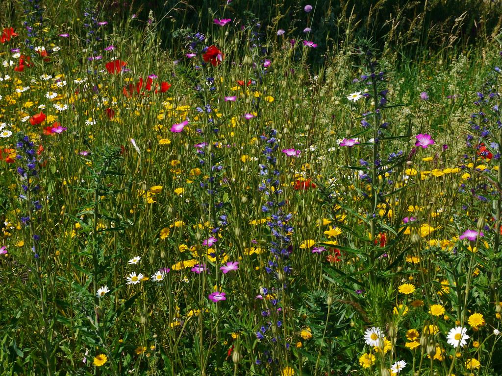 Kr 228 Uterwiese Herbs And Flowers Stefan Flickr