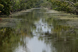 Swamp and Bayou Tour | by Numinosity (Gary J Wood)