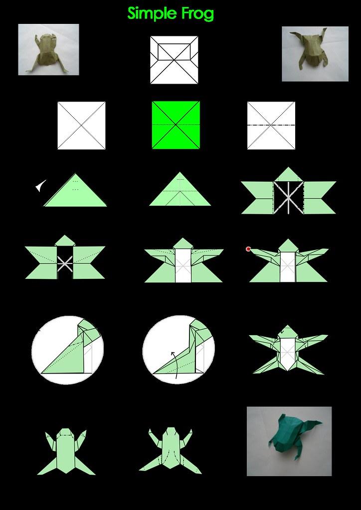 Simple Frog Diagram