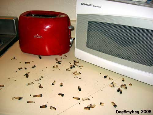 Mom We Have Roaches This Is A Photograph I Took