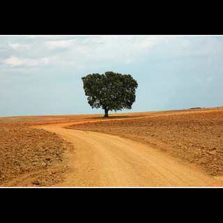 Tree, Alentejo, Portugal | by CGoulao