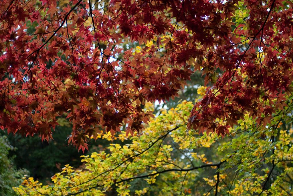 Fall Foliage Stanley Park Vancouver Bc Canada E P1