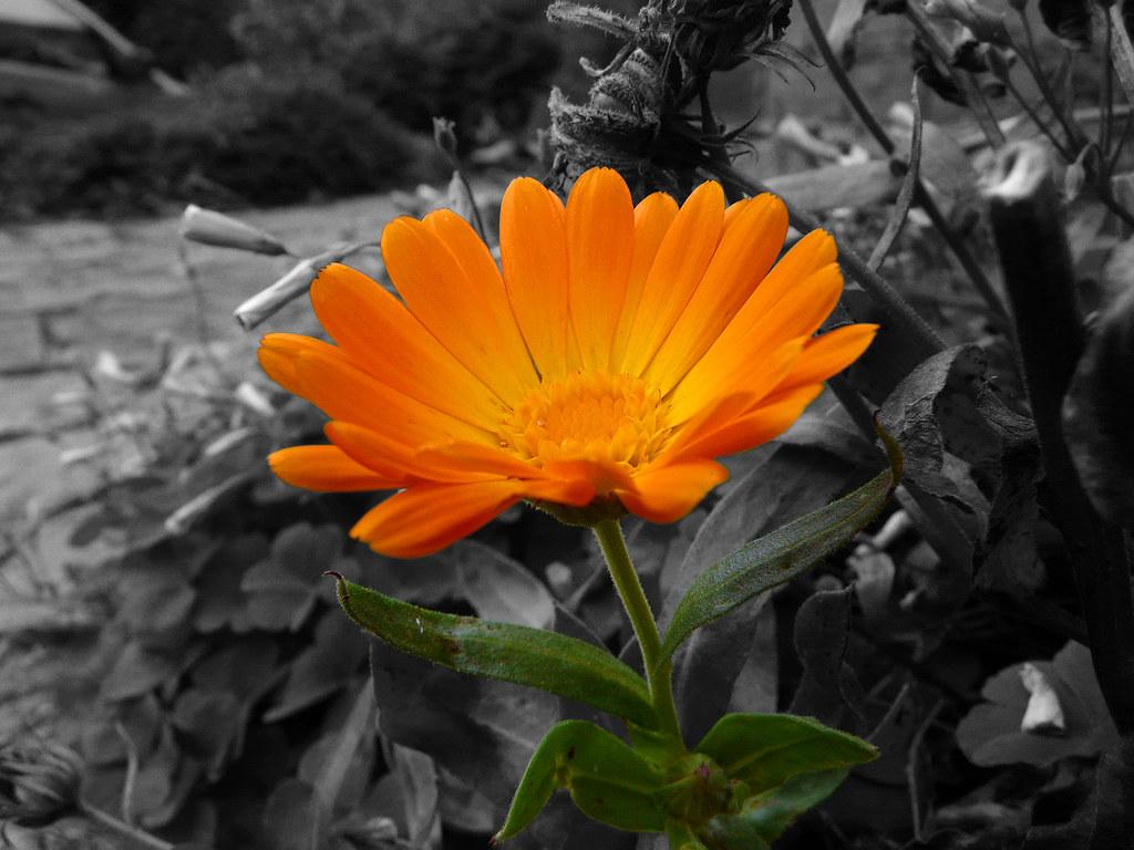 Black White Colour Flower If That Makes Sense View This Flickr