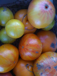 Heirloom Tomatoes | by swampkitty