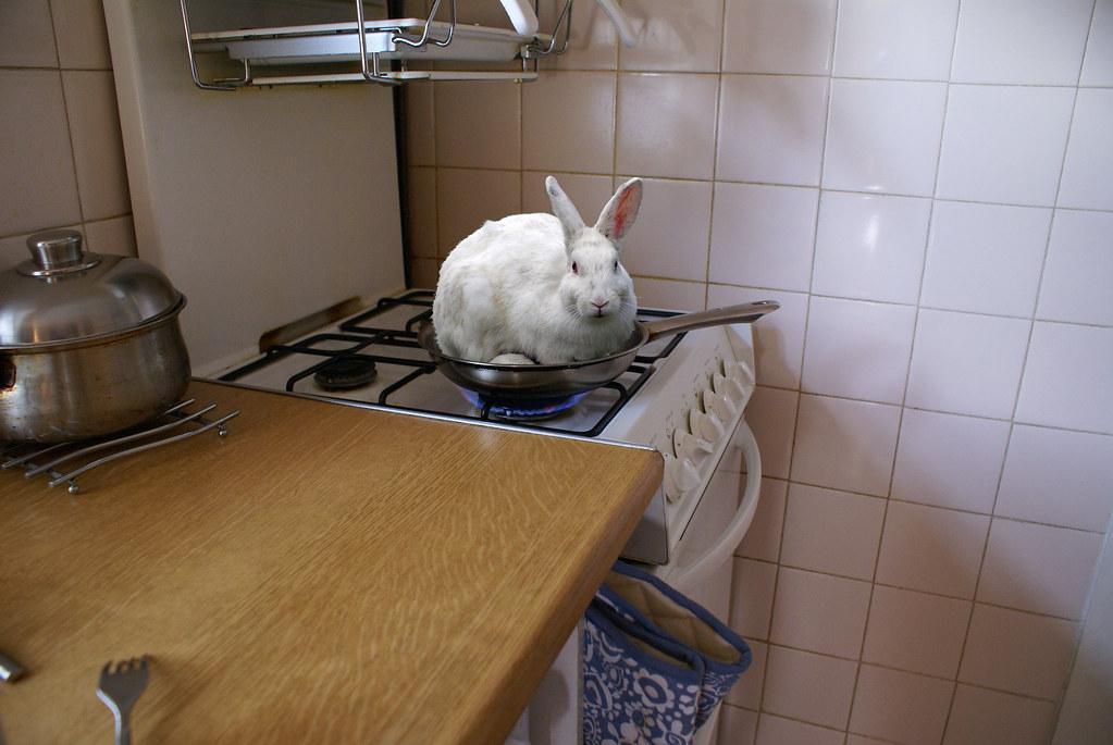 Permalink to Rabbit Jobs