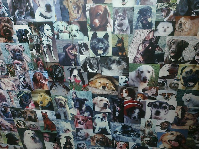 Image Result For Downtown Dogs Chicago
