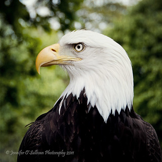 Eagle Eyed | by Jennifer O'Sullivan Photography