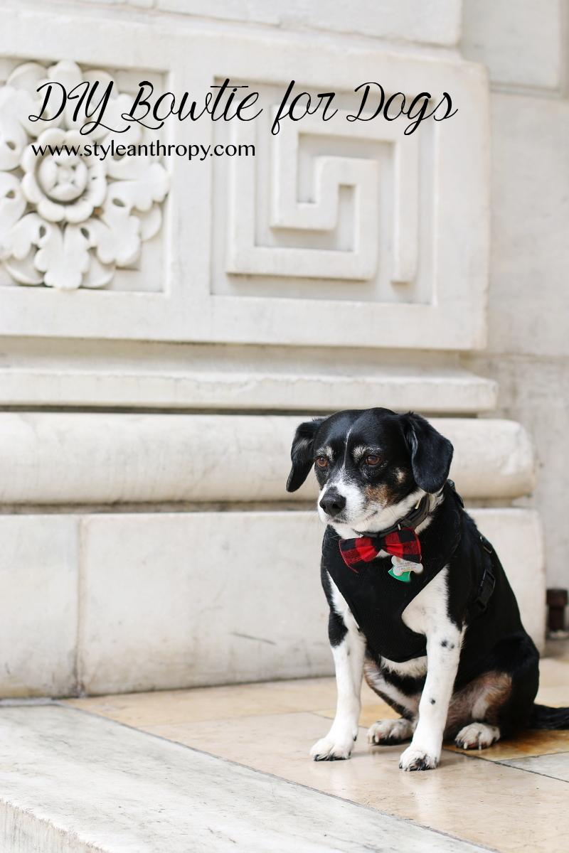 dog-louis-red-plaid-bowtie-9