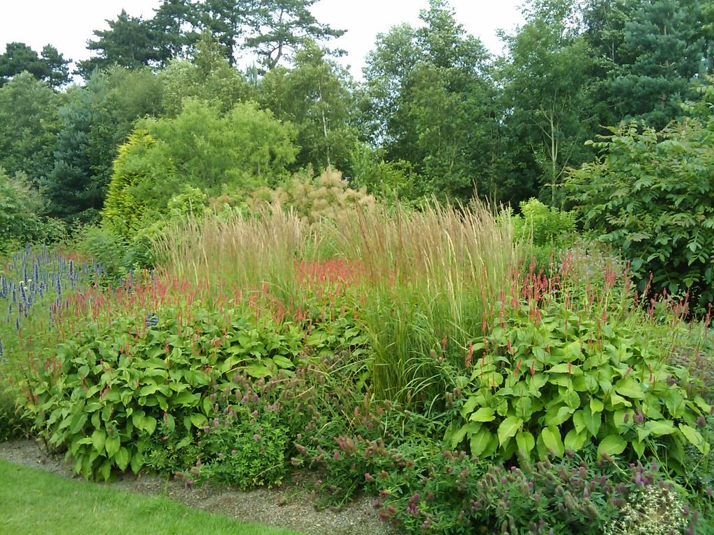 Piet oudolf border rhs tuin wisley wisley juli 2009 for Piet oudolf plant list
