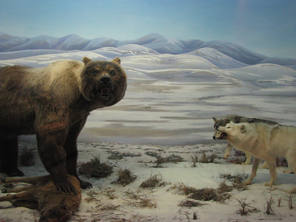 beautiful montage at beringia interpretive centre whiteho