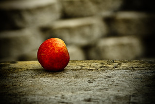 Day 221 - Still Life | by brianjmatis