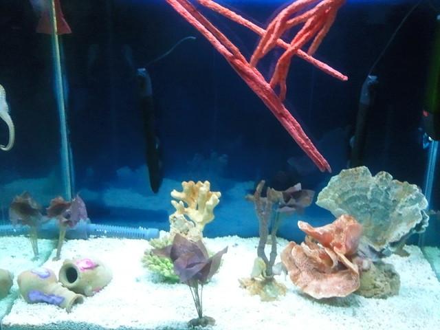 Seahorse aquarium explore reveriewit 39 s photos on flickr for Seahorse fish tank