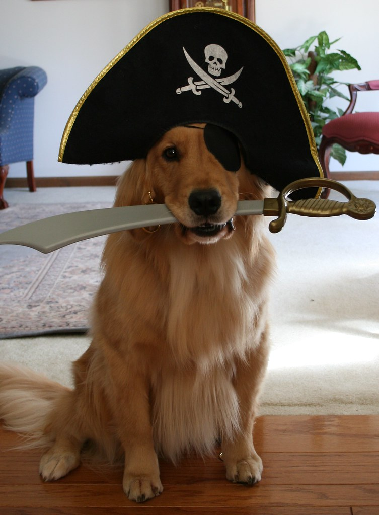Pirate Puppy - Album on Imgur