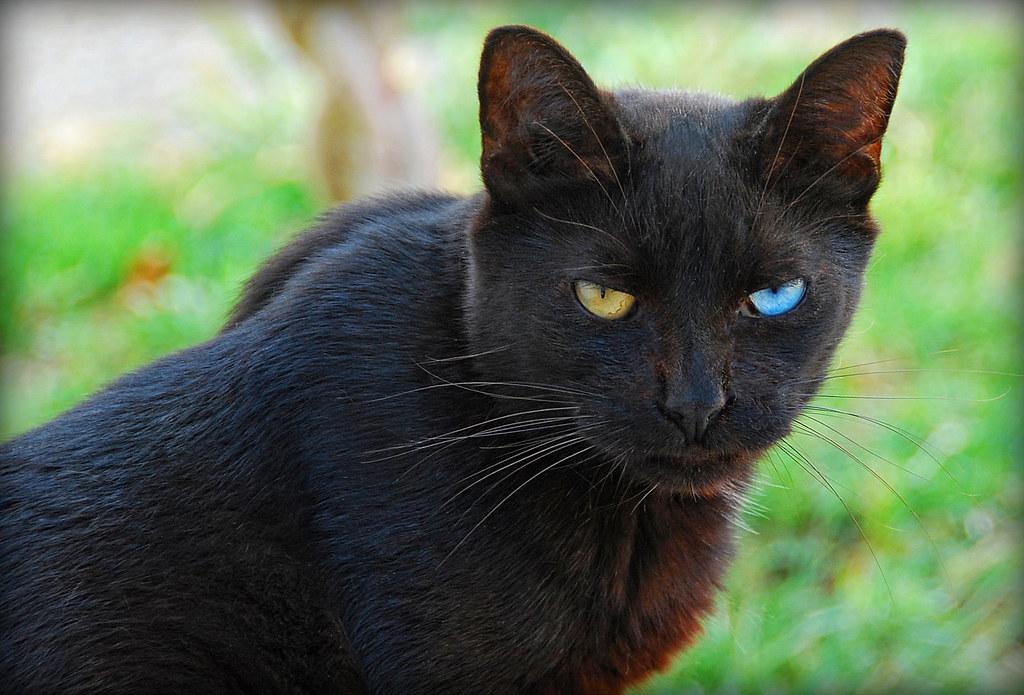 Black Cat Blog