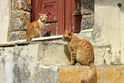 Cats on steps | by Marite2007
