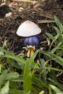 Saturday Shrooms | by kodomut