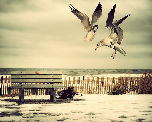 Dancing Gulls(Front Page) | by dog ma