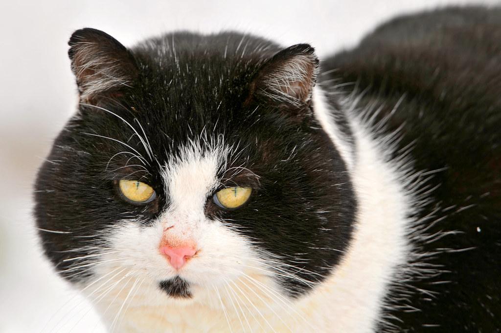 Fluffy Black Cat Sainsburys Paignton