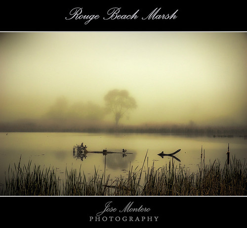 Rouge Beach Marsh | by J Montero