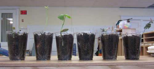 bean growth