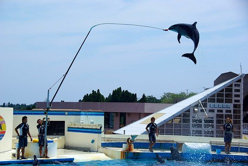 Dolphin Show,Okinawa Japan | by 老懵兔