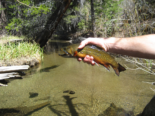 Backcountry fly fishing fly fishing in the eastern for Backcountry fly fishing