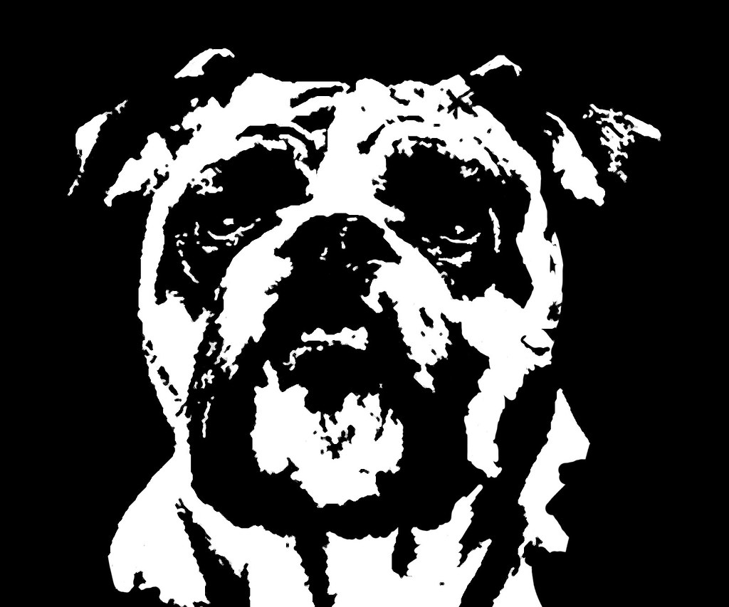 Stencil Bulldog pictures exclusive photo