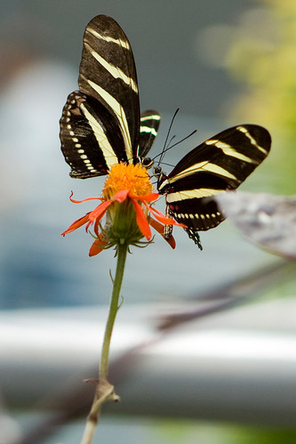 Rainforest Butterfly 2 | by Second City Warehouse