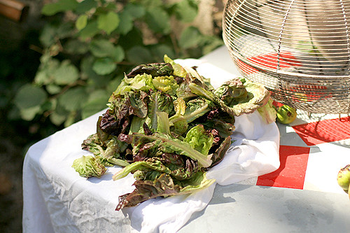 drying lettuce | by David Lebovitz