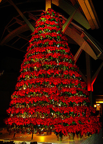 Poinsettia Christmas Tree | This is an outdoor scene at the ...