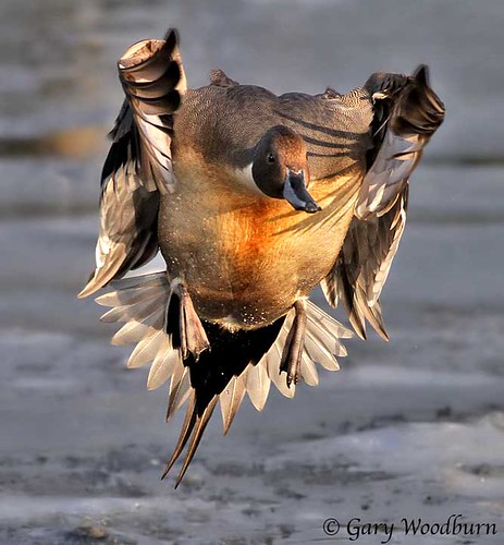 Cautious Landing on Ice | by FreeSpirit5