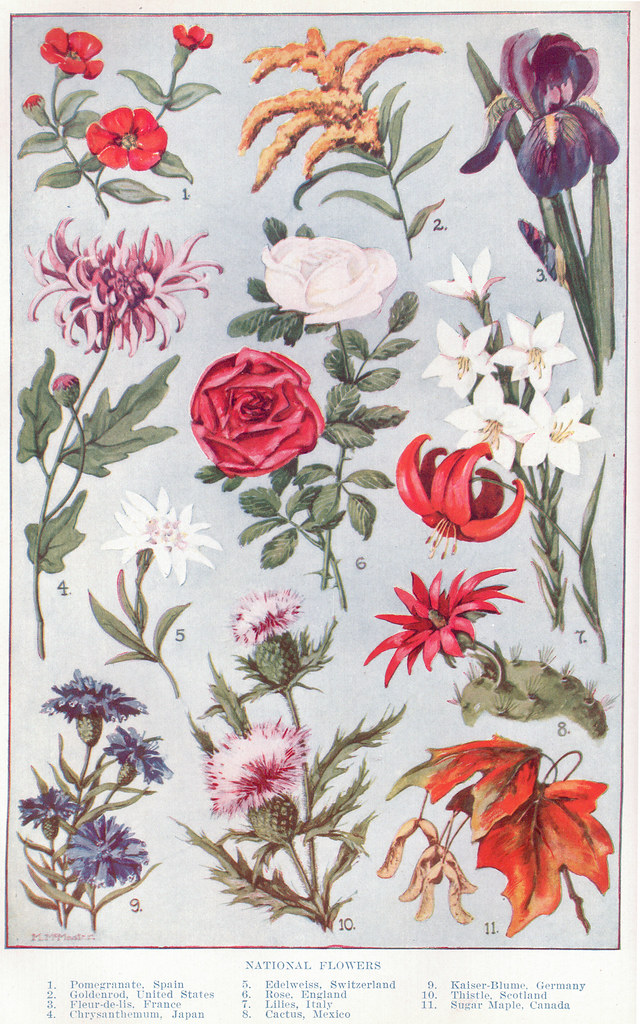 National Fowers Page 1052 1053 This Color Illustration