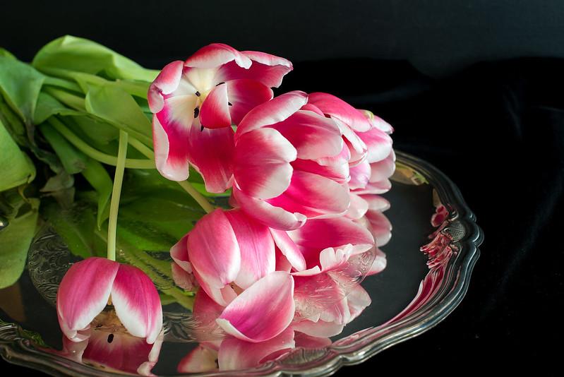 matognatur tulipaner04