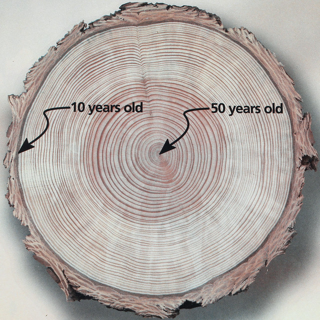 Tree Ring Logo Design