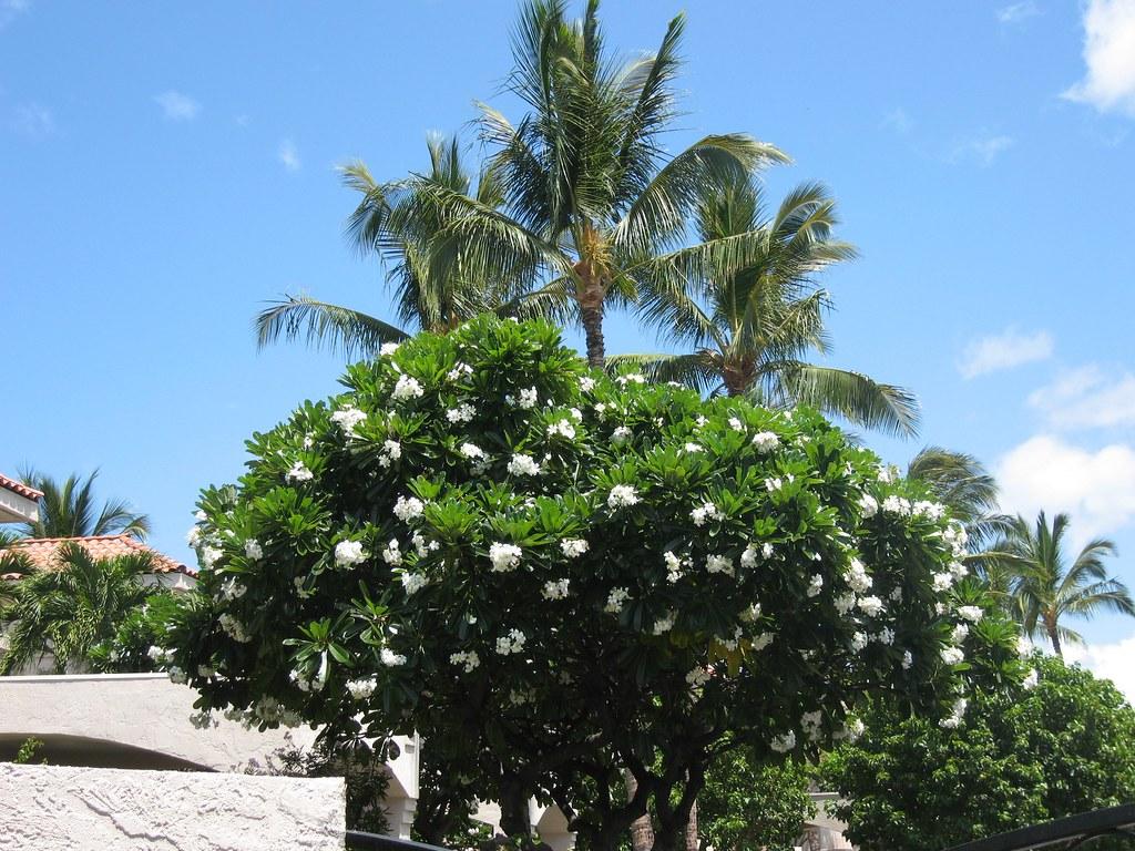 Beach Resort In Busuanga Palawan