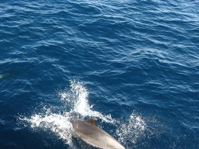 Channel Islands National Park Number Of Species