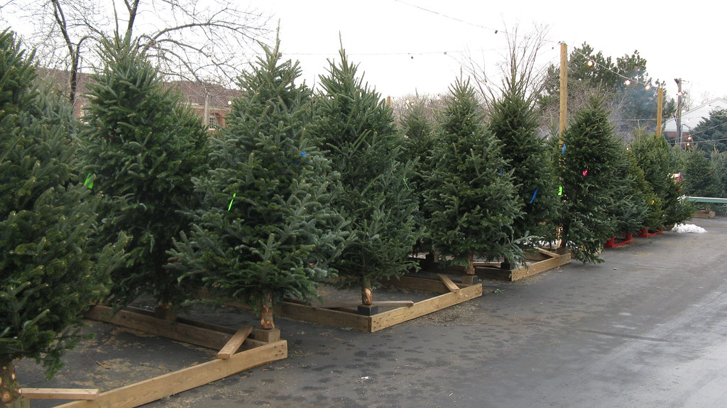 christmas trees for sale in the parking lot at weiss ace hardware glenview illinois