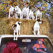 Terriers72x400
