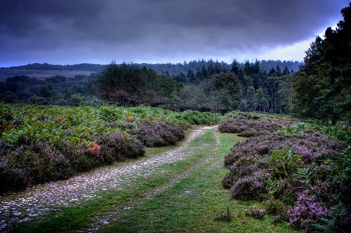 New Forest Landscape | by davidgsteadman